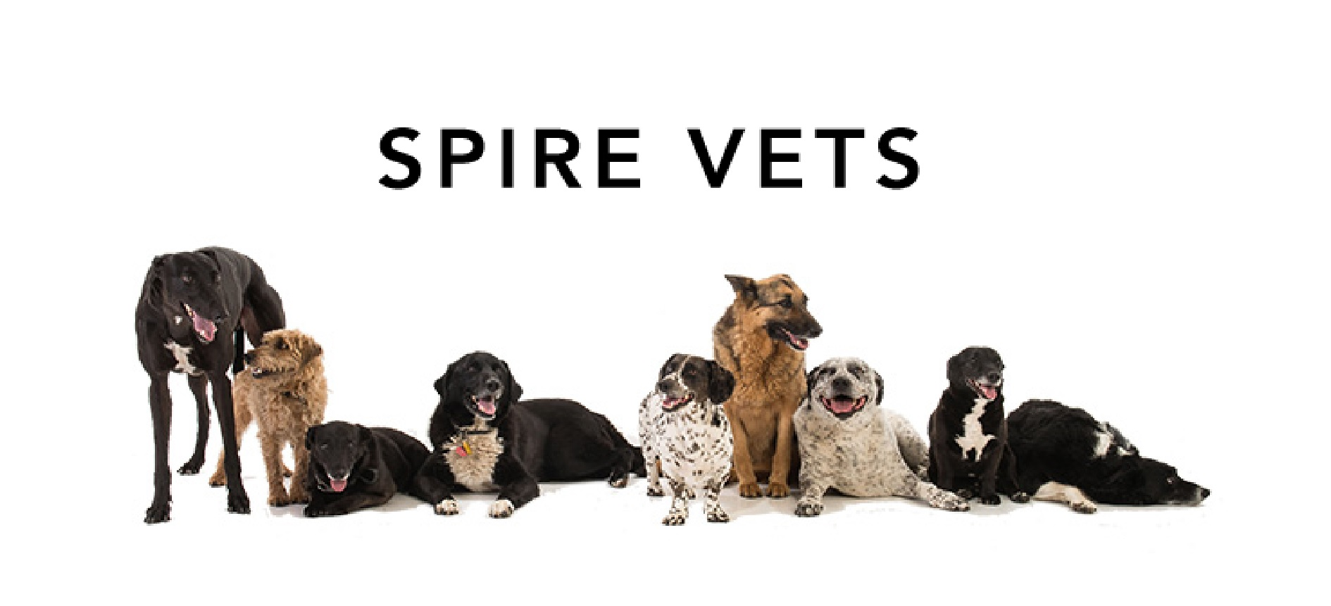 http://www.spirevets.co.uk/home.html logo