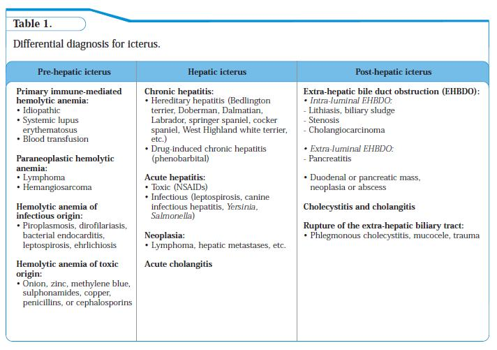 Table 1 - Differential diagnosis for icterus
