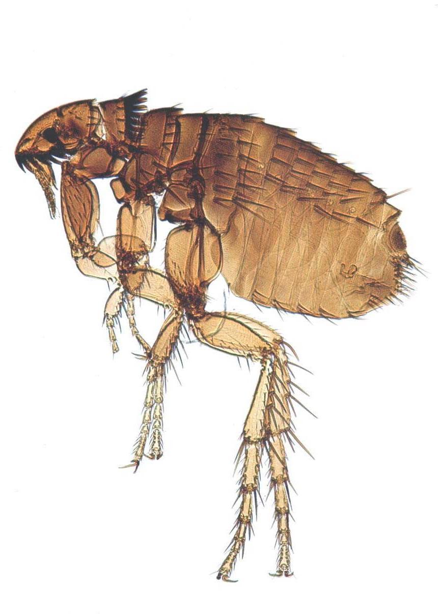 ensure owners implement a good flea control regime