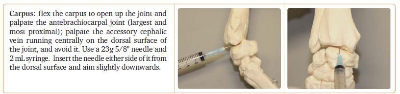joint aspirates - carpus
